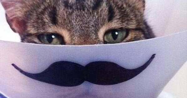 24 Cat and Dog Pics You Just Have To See dose.com