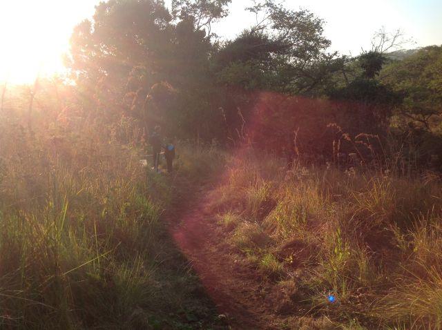 early morning sun filtering through KZN bush @kzntrailrunning #maweni - See more at: http://s185.photobucket.com/user/Donnette_2007/media/Talbot%20Maweni%20Trail%20Race%20KZNTRAILRUNNING%2015613/68e41395139d91c18a825a16cb163f15.jpg.html?sort=2=21#sthash.ahC2KMYy.dpuf