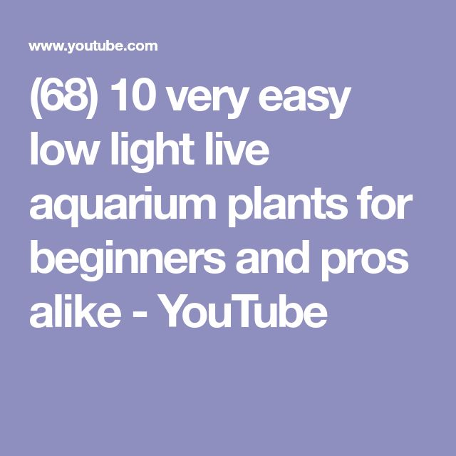 (68) 10 very easy low light live aquarium plants for beginners and pros alike - YouTube