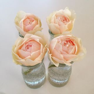 My #first #four #handpicked #roses #fresh from my #flower #garden right outside my #workroom #flowerlove