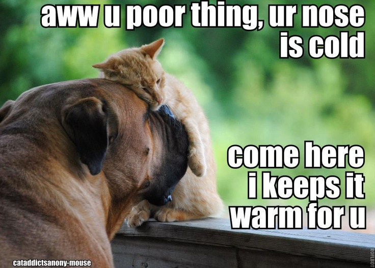 Funny Dogs Without Words 313 best images...