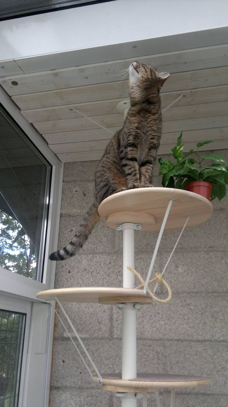 IKEA Hackers: pet furniture This is bloody brilliant. Uses Lazy susans and the cat shelf. Gotta try to make one of these