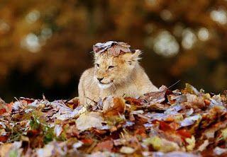 Wild autumn | Яркие Краски Мира (обои красивые картинки фото)