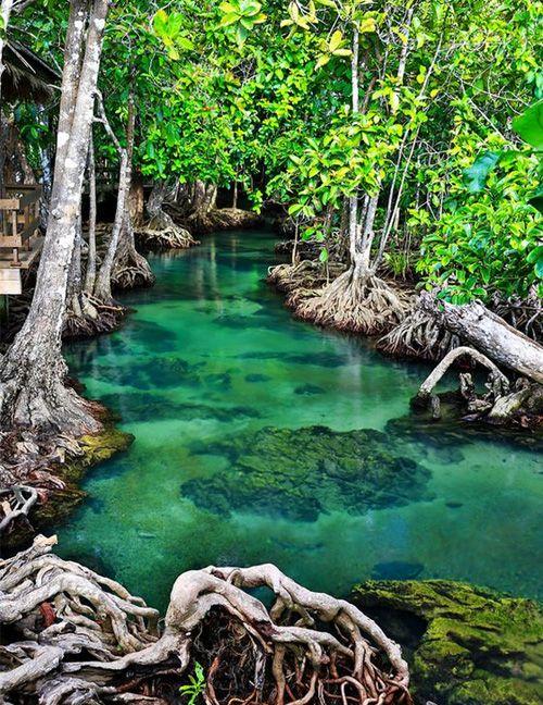 Amazing Emerald Stream Krabi - Thailand