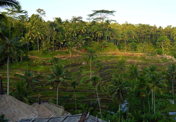 Bali – svet zelených, rýžových polí