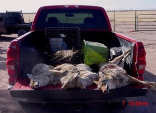 Ban Wildlife-Killing Contests in New Mexico