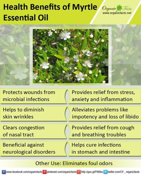 The health benefits of Myrtle Essential Oil can be attributed to its properties like antiseptic, astringent, deodorant, expectorant and sedative.