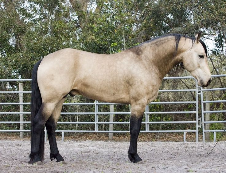 Pictures Of Belgian And Palomino Horses Allow Me To Pin