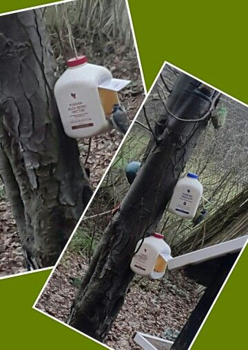 Forever living products healthy for human and birds