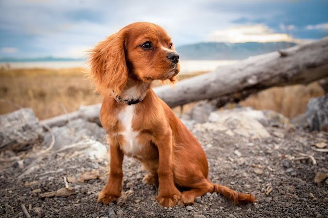 5 #Dog Diseases Impacted by #Nutrition