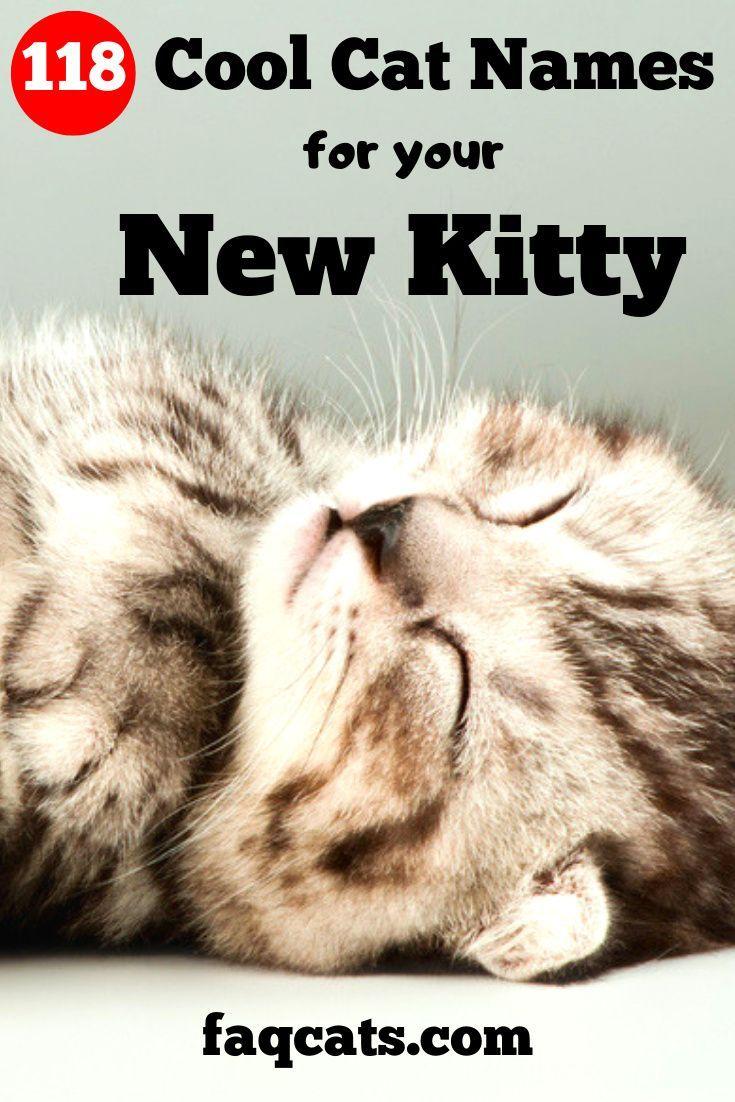 Cool Boy Cat Names In 2020 Cat Names Kitten Names Cute Cat Names