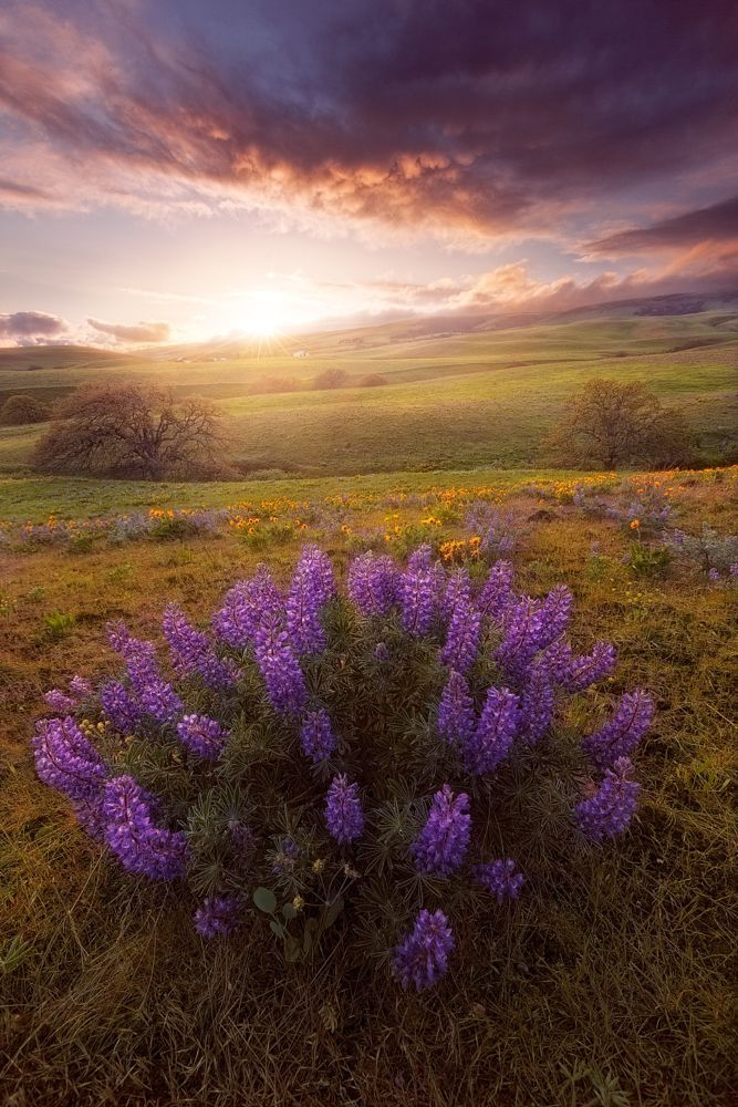 Columbia Hills (Oregon) by Miles Morgan on 500px