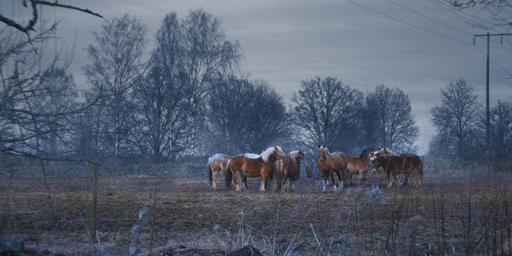 Feeding Horses by lucanii  on 500px