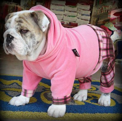 ❤ Easter Plaid ~ makes it easy to RUN for the Easter Eggs ! ❤ Posted on Baggy Bulldog