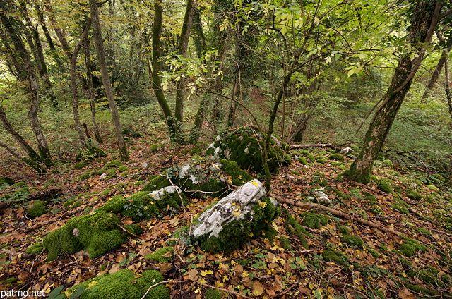 Photographie de sous bois en automne dans la forêt de Savigny en Haute Savoie