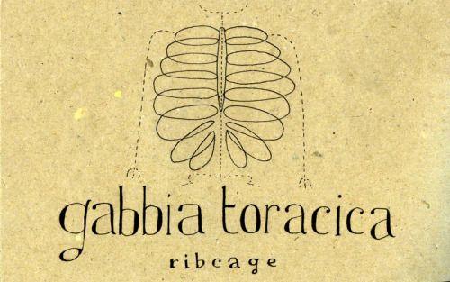 588: Gabbia toracica