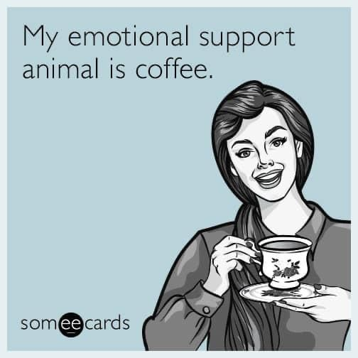Pin By Tiffany Moore On For The Love Of Coffee In 2021 Funny Coffee Quotes Coffee Meme Emotional Support Animal