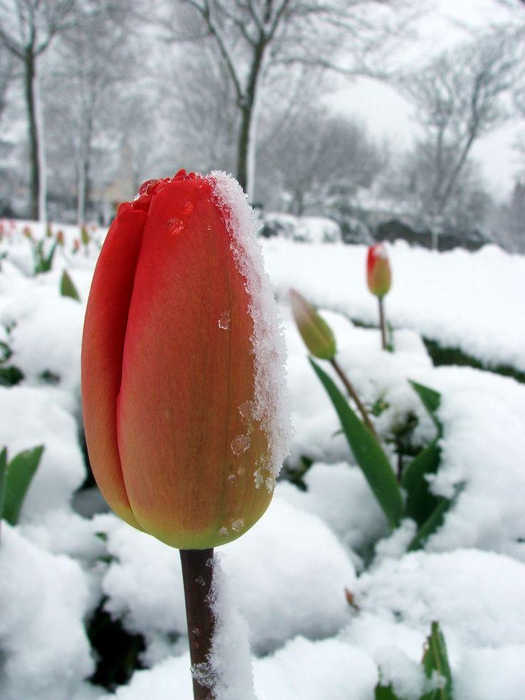 Baw się florystyką  www.florysta3d.pl