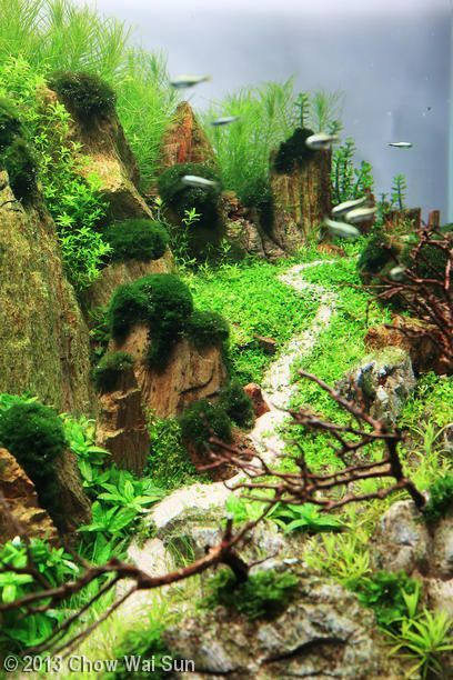 49 best aquascapes octopus gardens images on pinterest for Aquarium 20 litres poisson rouge