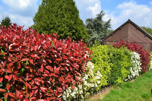 Comment créer une haie d'arbustes : persistants, fleuris, panachés ?