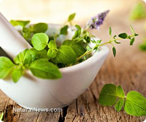 Bacopa monnieri improves brain function and prevents mental diseases