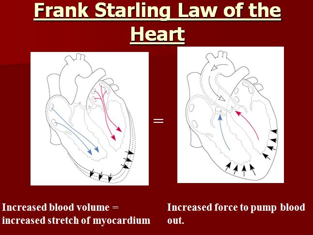 Image result for starling's law of the heart