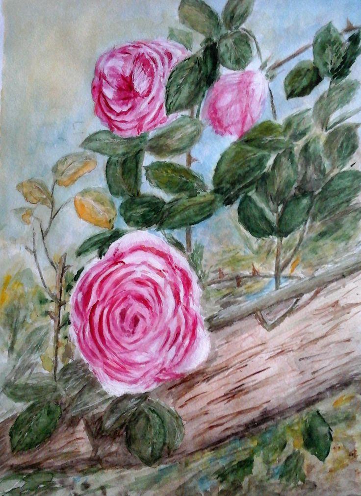 pink roses. watercolour