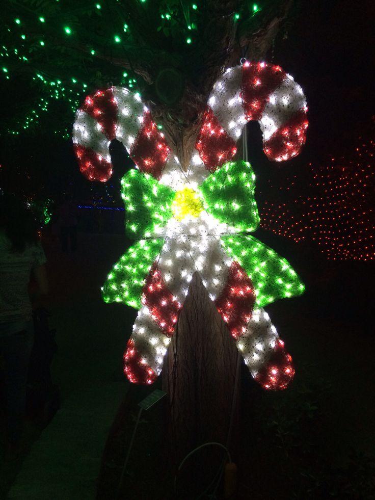 Hunter Valley - Christmas Light