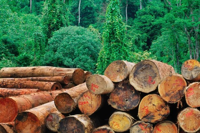 RadioNational - ASIA PULP AND PAPER PLEDGES IMMEDIATE END TO DEFORESTATION. Logging in lowland rainforest in Sabah, Borneo