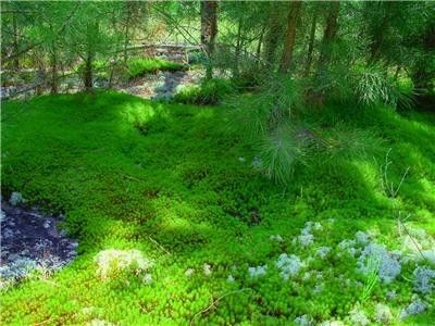 Live Moss Starter Kit-Moss Paint for your Yard - Rocks and More