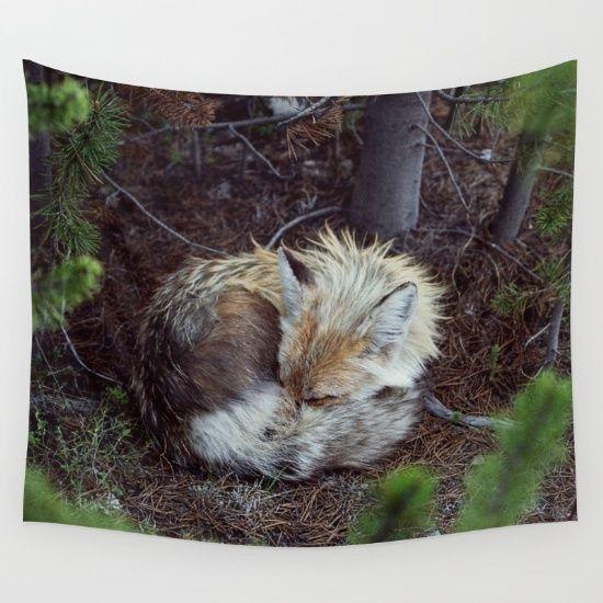 sleeping, fox, wildlife, animal...