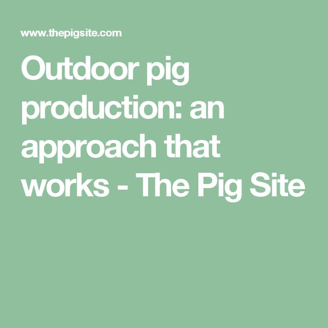 Outdoor pig production: an approach that works - The Pig Site