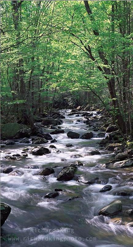 Greenbrier, Great Smoky Mountains National Park, Tennessee: Great Smoky Mountain