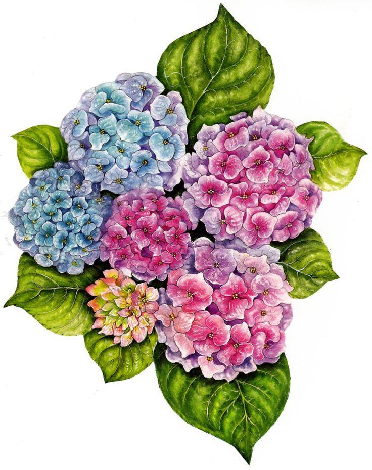 201 best printables hydrangea images on pinterest etchings rh pinterest com hydrangea clipart borders hydrangea clip art images
