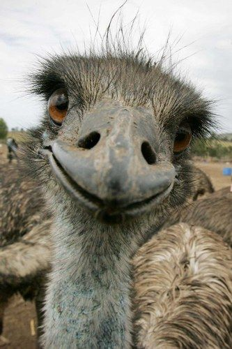 Smile! #Emu