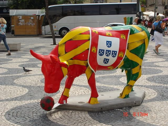 Portuguese Bull