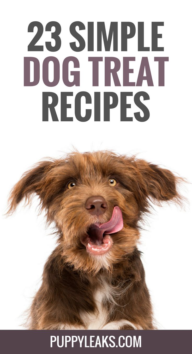 23 Simple Dog Treat Recipes: 5 Ingredients or Less - Puppy Leaks