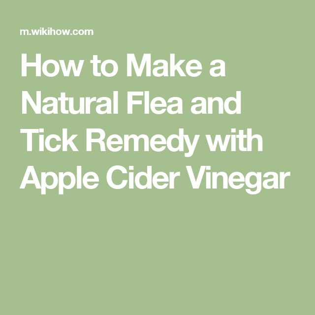 Make A Natural Flea And Tick Remedy With Apple Cider