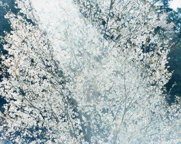 Risaku Suzuki - Stream of consciousness | Special Exhibitions | MIMOCA