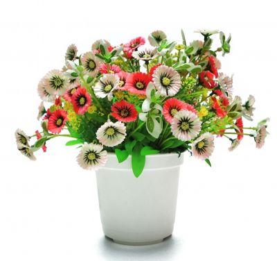 Flori de iarna pentru ghiveci - Casa și Grădina