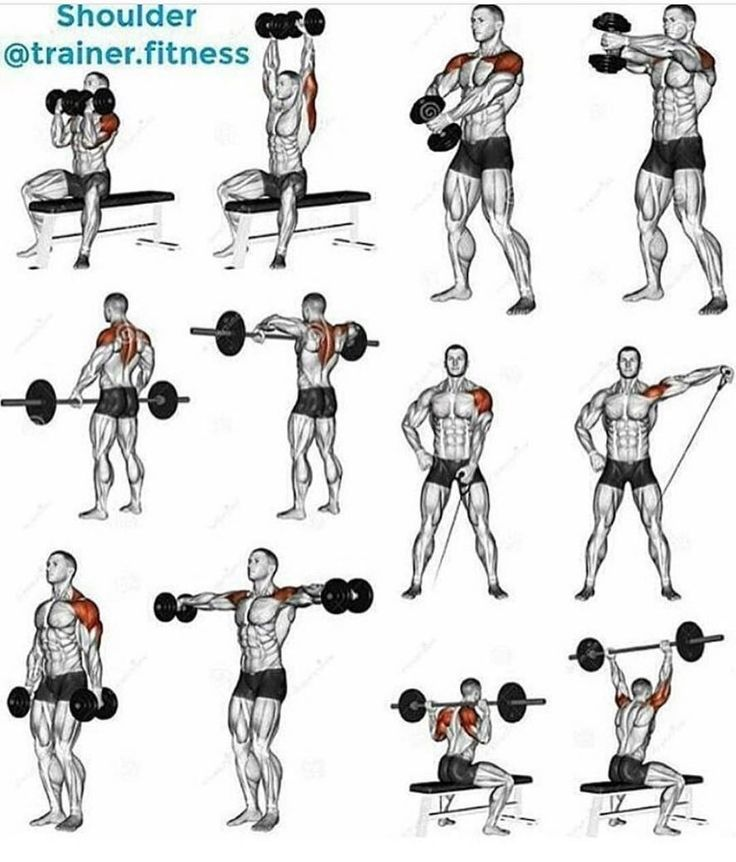 how to work out different back muscles charts