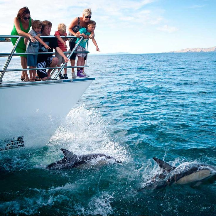 Water activities in Auckland  Auckland is surrounded by water so get out and make the most of it. Cruise the beautiful Hauraki Gulf, sail an ex-America's Cup yacht, go snorkelling with the fishes, jet around the Waitemata Harbour or go whale and dolphin spotting.