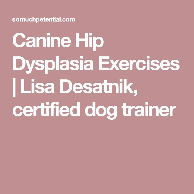 Exercises for canine hip dysplasia