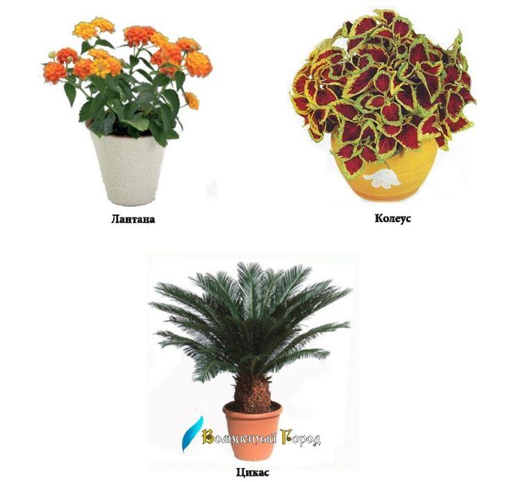 Ядовитые растения. Опасны