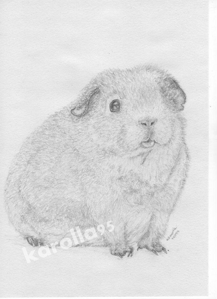 Guinea Pig by karolla95.deviantart.com on @DeviantArt