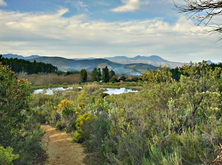 Helderberg Nature Reserve, Somerset West, South Africa