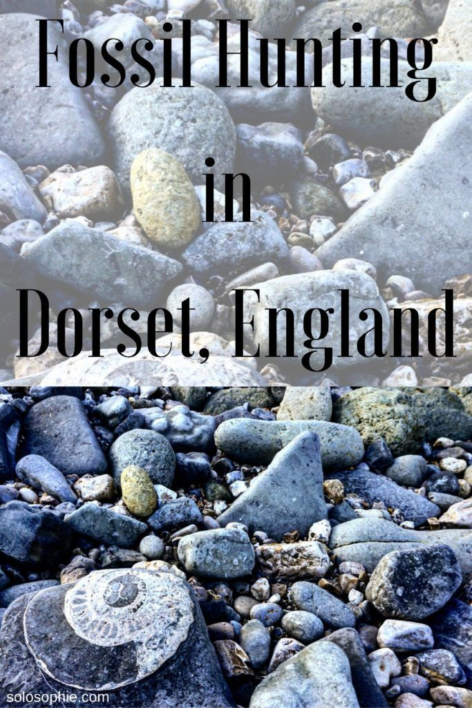 how to go fossil hunting in dorset