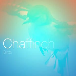 Chaffinch - Birds, Bird Calls, Spiritual, Gregorian Chants, New Age, Nature, Orthodox Christian, Ethereal Music