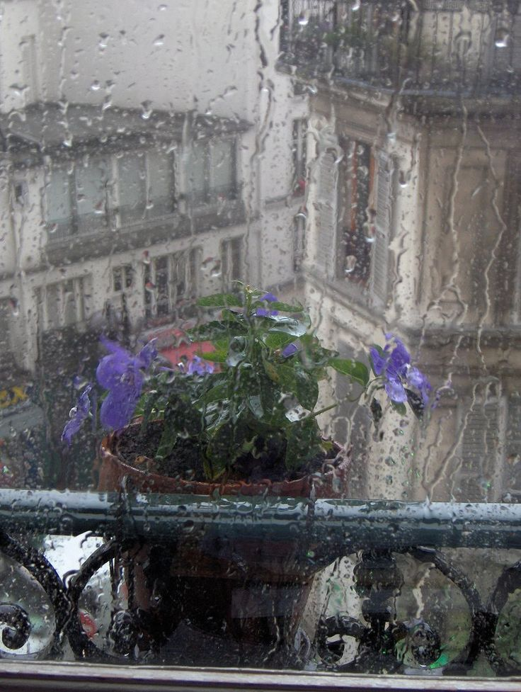 """MY HUSBAND'S THOUGHTS WHEN IT RAINS.....""""OH GOOD, I DON'T HAVE TO WATER THE FLOWERS AND PLANTS TODAY!!""""......ccp"""