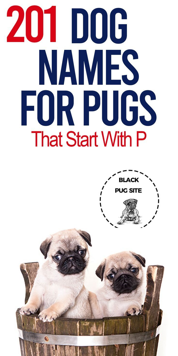 Find Some Of The Best And Most Creative Dog Names For Pugs That